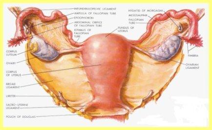 Diagnosis of Female Genital TB at Rotunda Clinic, Mumbai